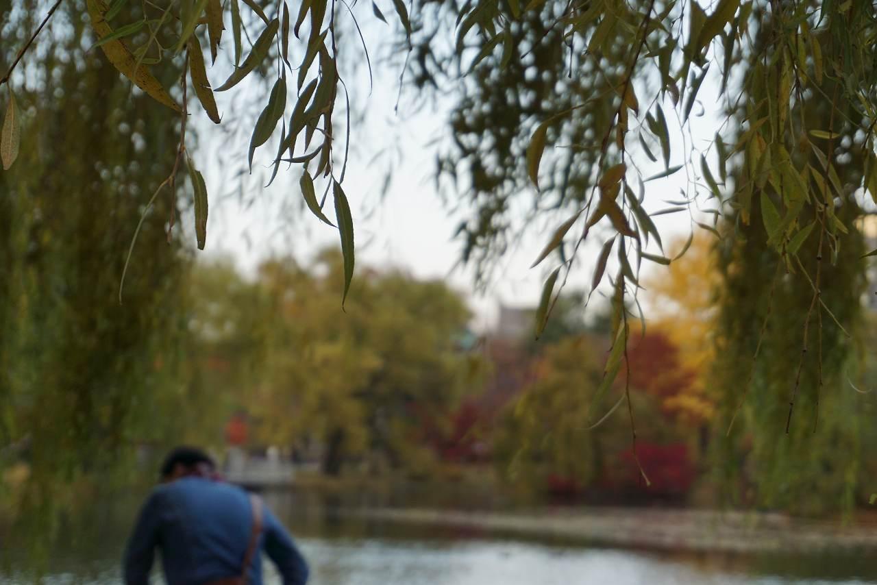 中島公園池